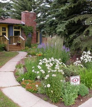Calgary garden coach my favourite plants for a sunny low for Low maintenance plants for front yard