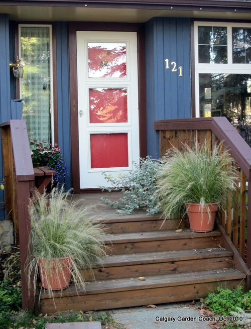 Calgary garden coach ornamental grasses not just for the but grasses work great in pots too ive had these two pots of stipa tenuissima mexican feather grass growing on my front steps all summer workwithnaturefo